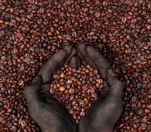 Coffee beans and hands