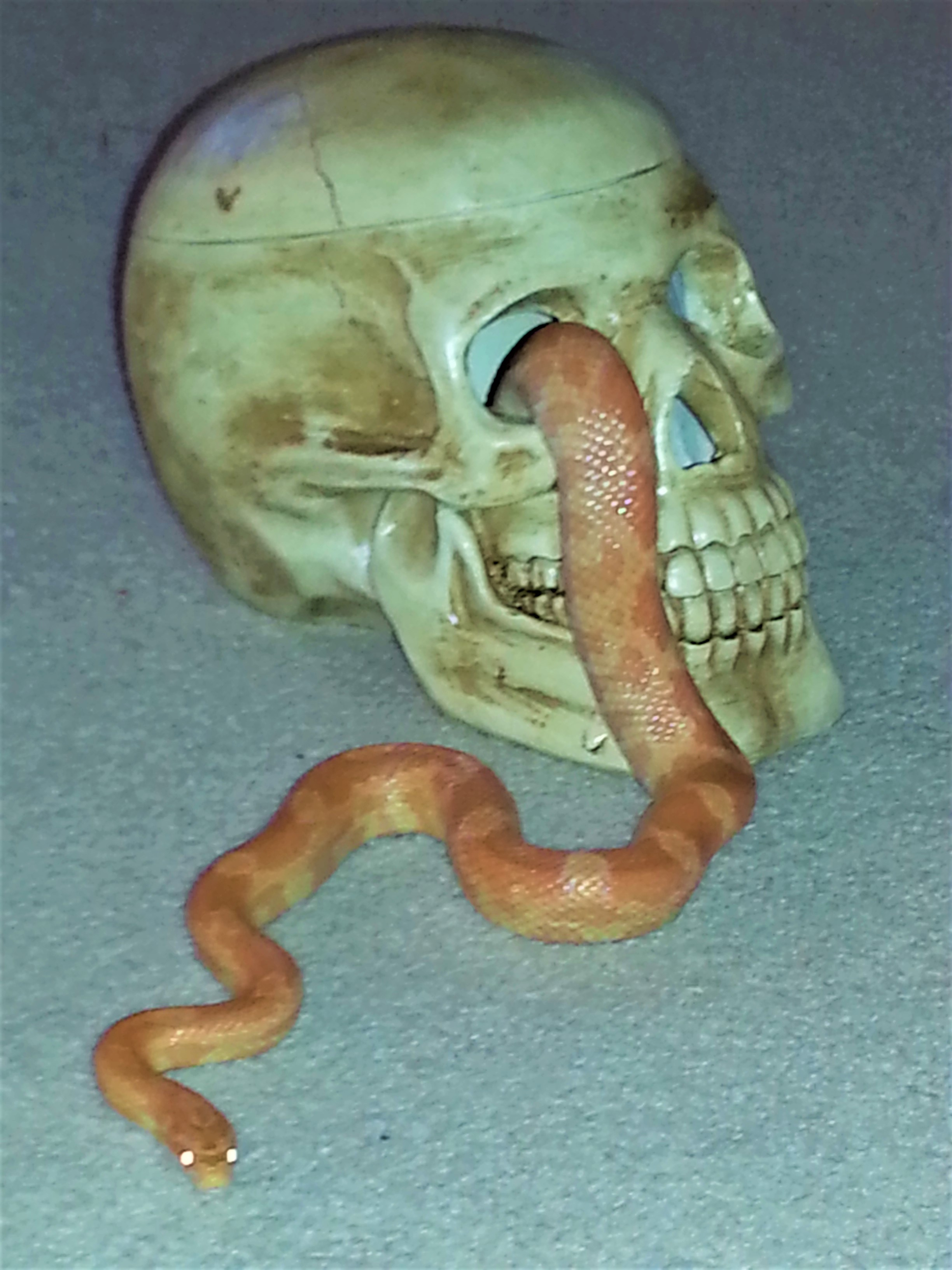 Halloween skull and snake - Copy